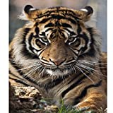 Blxecky 5D DIY Diamond Painting By Number Kits,tiger(16X12inch/30X40CM)