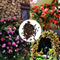 Aelove 100Pcs Perfume Climbing Plants Colorful Rock Cress Flower Seeds for Home and Garden