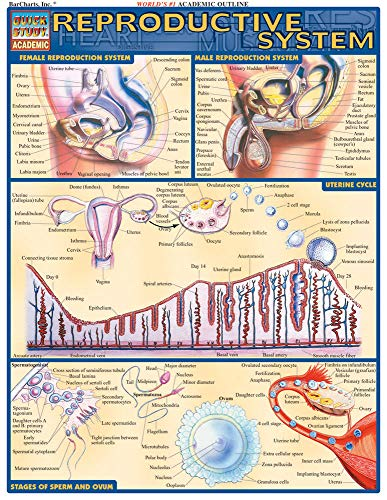 Male Reproductive Chart - Reproductive System (Quick Study Academic)