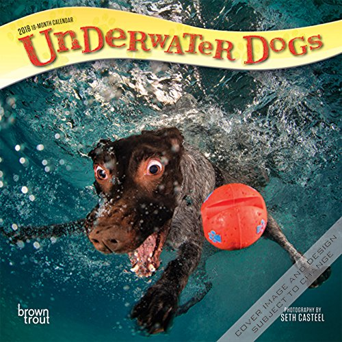 Underwater Dogs 2018 7 x 7 Inch Monthly Mini Wall Calendar, Pet Humor Puppy (Multilingual Edition)