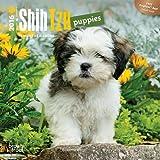 Shih Tzu Puppies 2016 Mini 7x7 (Multilingual Edition)