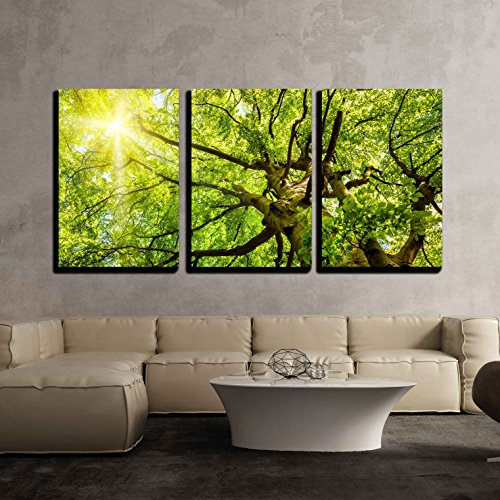 wall26 - 3 Piece Canvas Wall Art - the Warm Spring Sun Shining Through the Treetop of an Impressive Old Beech Tree - Modern Home Decor Stretched and Framed Ready to Hang - 24''x36''x3 Panels by wall26