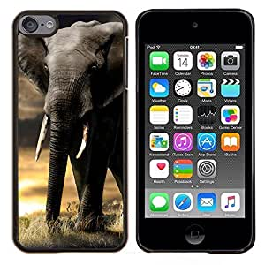 Queen Pattern - FOR Apple iPod Touch 6 6th Generation - elephant trunk sunset Africa Indian tusk - Cubierta del caso de impacto con el patr???¡¯???€????€??&