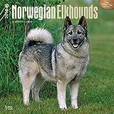 Norwegian Elkhounds 2016 Square 12x12 (Multilingual Edition)
