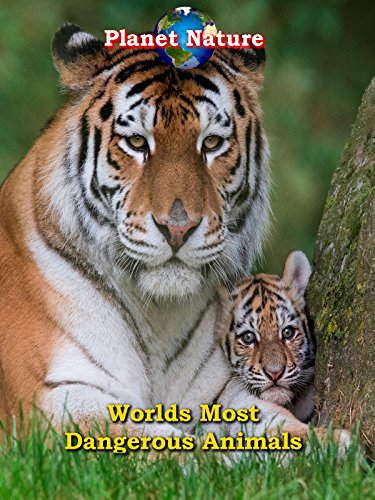 Worlds Most Dangerous Animals   Planet Nature