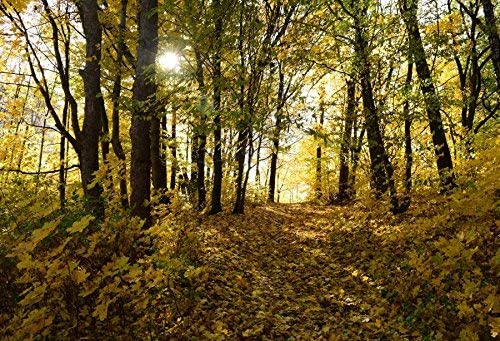 Outdoor Autumn Forest Backdrops 10x6.5ft Tall Trees and Golden Deciduous Leaves Cover The Filed Backgroud Wedding Photography Happy Vacation Leisure Life Artistic Studio Props