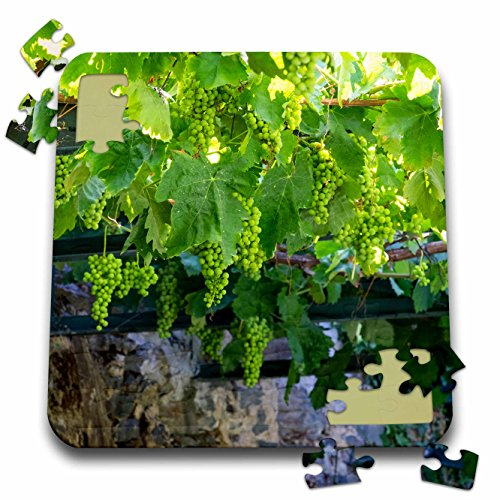 Danita Delimont - Douro Valley - Portugal, Douro Valley, grapes at a vineyard. - 10x10 Inch Puzzle ()