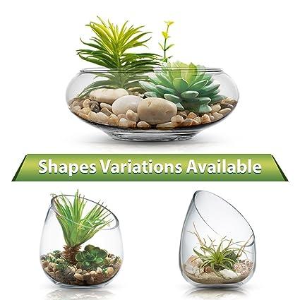 Amazon Clear Glass Terrarium Vase Planter Bowl With Succulents