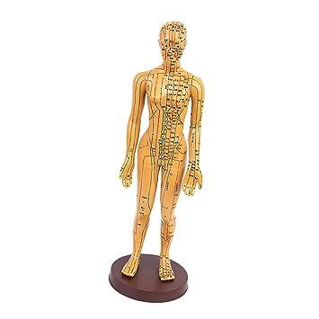 MagiDeal Acupuntura Modelo de Cuerpo Humano Meridiano de Bronce ...