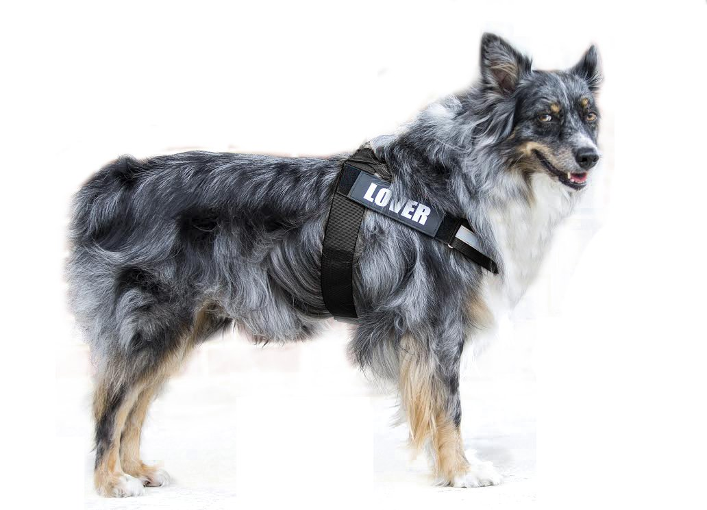 Black L (Chest 22.2-28.9\ Black L (Chest 22.2-28.9\ PUPTECK Reflective Big Dog Harness Adjustable with Handle Outdoor Vest for Large Breed Dogs with Removable Patches for Climbing, Walking& Hiking Black Large