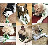 Jun-Li-pets-toys-Pet-training-ballMulti-color-and-durable2-Pack-toy-ball-color-will-be-shipped-randomly