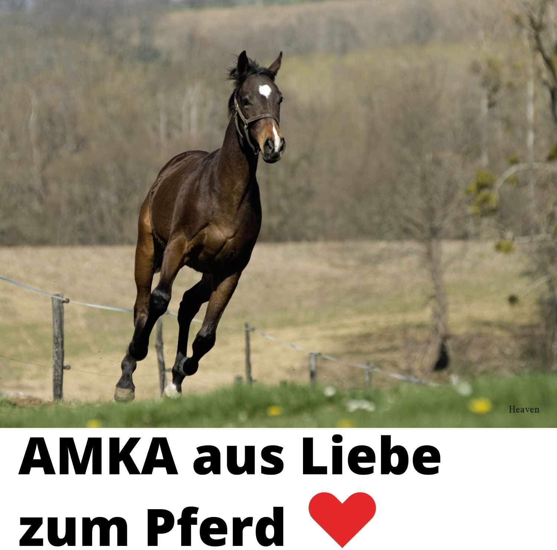 90x60 cm Maschen 4x4 cm Weiss AMKA Heunetz Slowfeeder ca