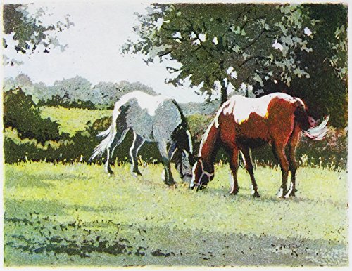 Sweet Spot, Giclee Print of Aquatint with Horses Grazing, 7 X 9 Inches ()