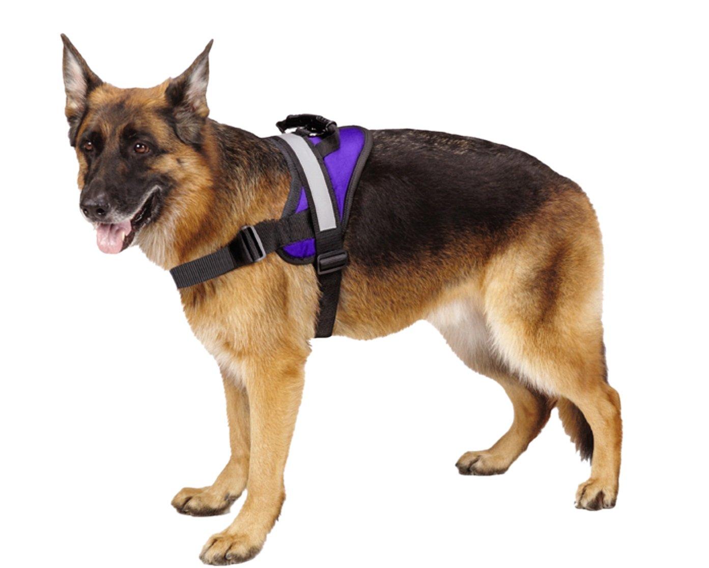 Purple M Purple M Big Dog Soft Reflective No Pull Purple Harness size M 20-26inch