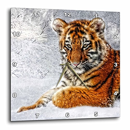 3dRose Baby Tiger Cub in The Snow Digital Composition of Four Photographs. - Wall Clock, 10 by 10-Inch (DPP_173002_1)