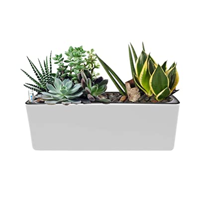 """UKan Self Watering Planter, Window Gardening Box, Plastic Flower Pots with Automatic Irrigation System Modern Decorative Gardening Pots for Indoor Plants, Herbs, Flowers, Rectangle, 16""""X5.5"""", White : Garden & Outdoor"""