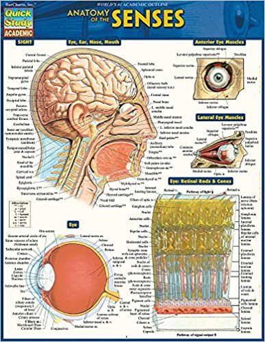 Anatomy of the Senses: Quickstudy Laminated Reference Guide (Quick ...