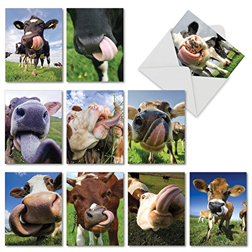 M4604OCB-B1x10 Cowlicks: 10 Assorted Blank All-Occasion Note Cards Featuring Images of Cows and Calves With Their Tongues Out w/White (Over Stationary)