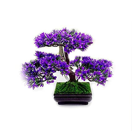 Amazon.com: Artificial Fake Plants Bonsai Potted Plant Mini ... on best dried flowers, succulent plant with orange flowers, house plant trees, house plants with fruit, house plants with leaves, house plants with pink, house plant identification, house plants for cats, house plants that bloom, dollhouse miniature plants and flowers, house plant purple underside, house plants with lily, house plants with red stems, variegated flowers, garden plants and flowers, potato vine plant flowers, house plants with color, house plants with butterflies, house plant purple heart,