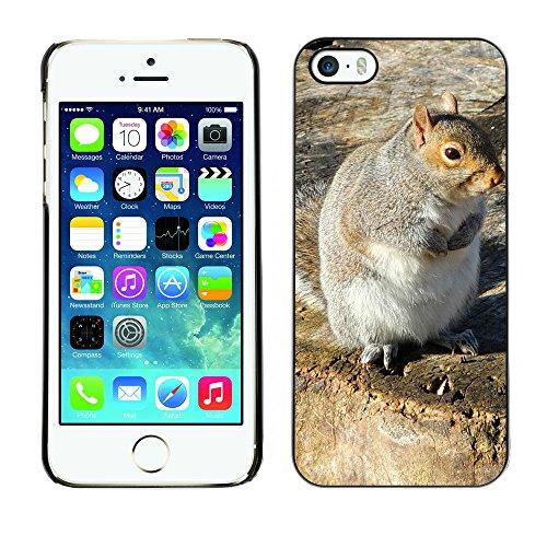 Premio Sottile Slim Cassa Custodia Case Cover Shell // F00008359 écureuil // Apple iPhone 5 5S 5G