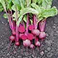 Beet Merlin F1 Seeds - Vegetable Seeds Package