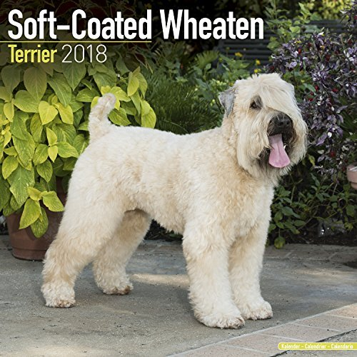 Softcoat Wheaten Terrier Calendar 2018 - Dog Breed Calendar - Premium Wall Calendar 2017-2018