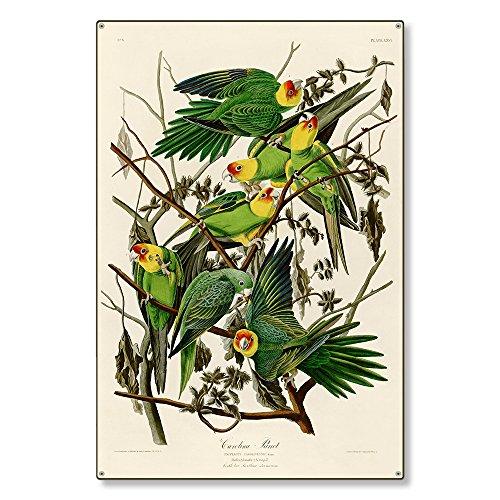 Large Metal Wall Art Decor Sign | Carolina Parrot Wildlife Nature