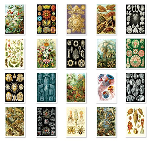 NATURAL CURIOSITIES by Ernst Haeckel postcard set of 20 postcards. Botanical illustrations theme post card variety pack. Made in USA. (Plant Vintage Postcard)