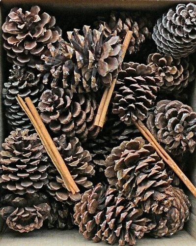 Cinnamon Scented Pine Cones with Cinnamon Sticks 30 perボックスブラウン(ナチュラル) Case of 180 pine cones B071DLHGP6  Case of 180 pine cones