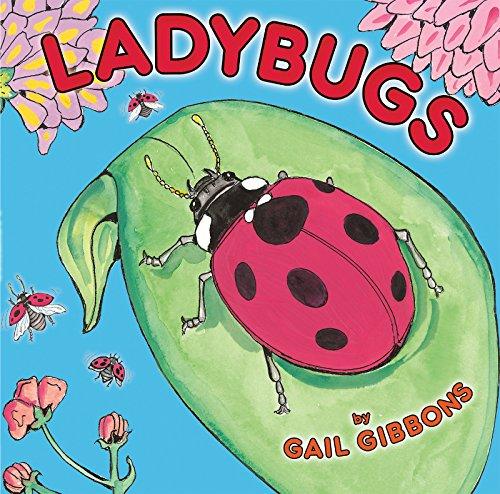 - Ladybugs