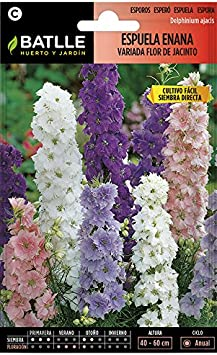 Semillas de Flores - Espuela Flor de Jacinto enana variada ...