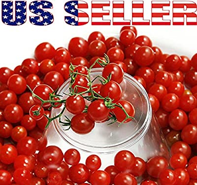 30+ ORGANICALLY GROWN Sweet Pea Currant Tomato Seeds, Heirloom NON-GMO, Extra Sweet and Heavy-Yielding, Low Acid, Indeterminate, Open-Pollinated, Long Season, Super Delicious, From USA