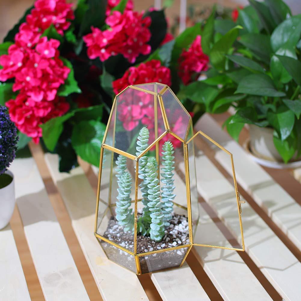 Il Rame Fellie Glass Plant Box Irregolare Vetro Piante terrario Box Geometrico succulente Vaso Display tavolino centrotavola a Mano Vaso di Fiori per Fern Moss n. Gold 12/x 12/x 19/cm