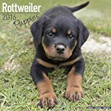Rottweiler Puppies Calendar - Breed Specific Rottweiler Puppies Calendar - 2016 Wall calendars - Dog Calendars - Monthly Wall Calendar by Avonside