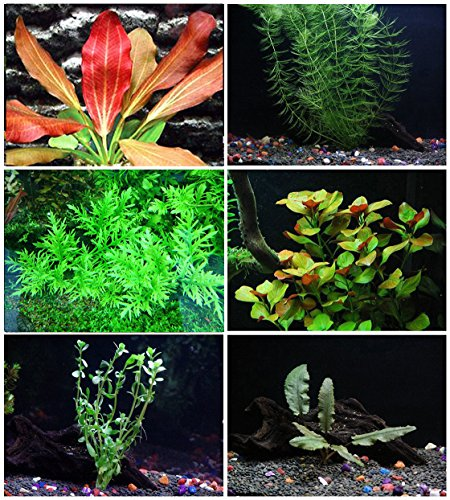 California Bundle - 25+ stems / 6 species Live Aquarium Plants Package by Aquarium Plants Discounts