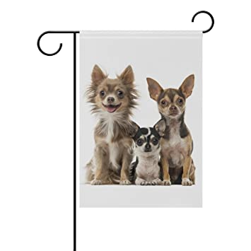 Amazon com : Top Carpenter Chihuahuas Dogs Double-Sided
