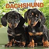 Dachshund Puppies 2018 12 x 12 Inch Monthly Square Wall Calendar, Animals Dog Breeds Puppies (Multilingual Edition)