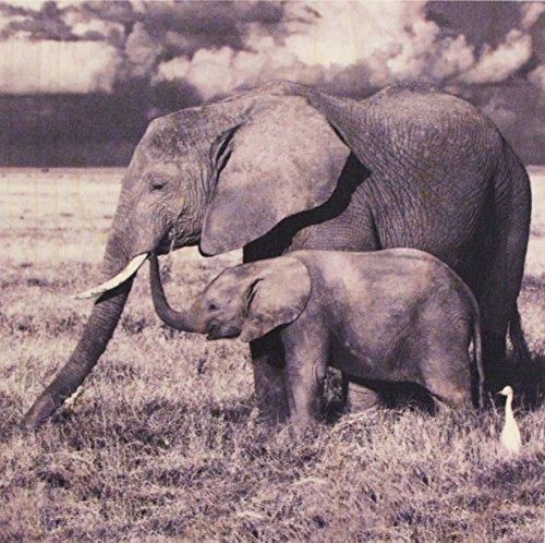 Growth Chart Art Nursery Safari Animal Wall Art Plaque, Elephants