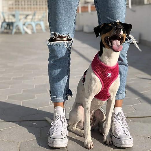 Dukier - Arnés básico para Perro con Malla Transpirable, cómodo y ...