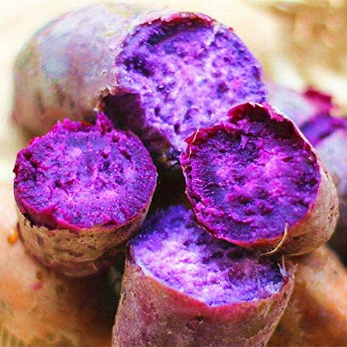 (Laliva 20Pcs/Bag Sweet Potato Seeds Fresh Food Vegetable Farm Garden Plants Red Purple Potato Seed - (Color: Purple))