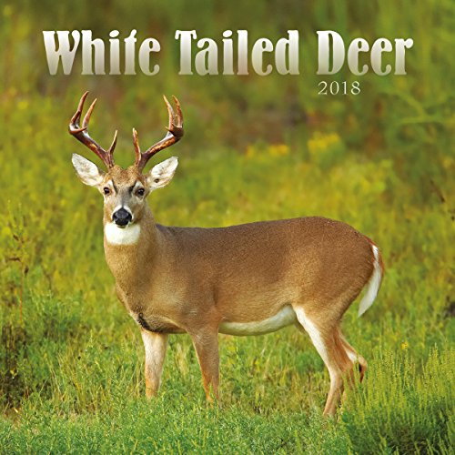 Turner Licensing White Tailed Deer Office Wall Calendar (18998940059) -