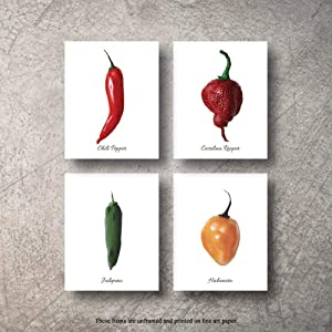Botanical Prints Wall Decor - Kitchen Art Food Herb Pepper Set UNFRAMED Pictures 4 PIECES Nature Floral Pepper Plant Flower Green Small Botanical Prints Wall Art Vintage Print Poster (8x10)