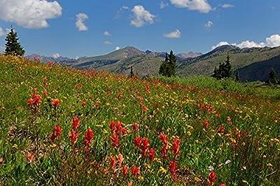 Rocky Mountain Wildflower Seed Blend