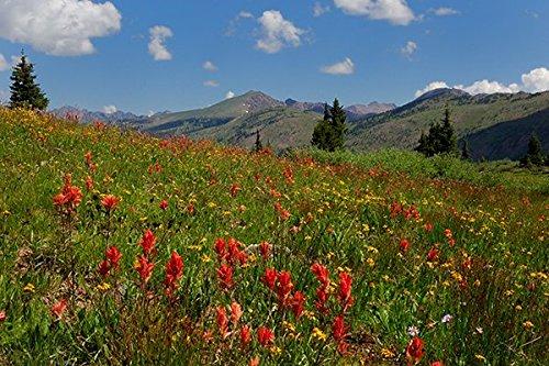 Rocky Mountain Wildflower Blend (2000 SQFT)