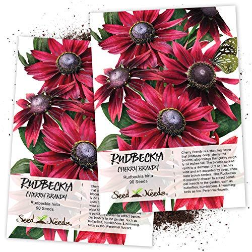 (Seed Needs, Cherry Brandy Rudbeckia (Rudbeckia hirta) Twin Pack of 90 Seeds Each)