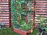 Frame It All 300001631 Veggie Sienna Raised