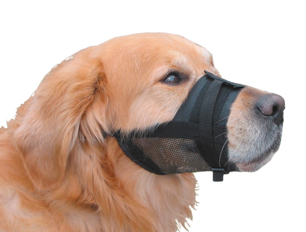 Image result for muzzle
