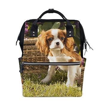 Amazon.com: Mochila de PET Boston Terrier para perro y mujer ...
