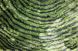 Modern Abstract Plush 3 feet by 7 feet (3\' x 7\') Abstract Shag Green Contemporary Area Rug