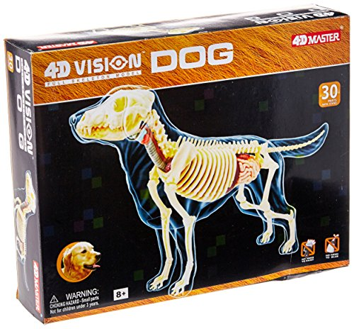 4D – Full Skeleton Dog Anatomy Model by FameMaster